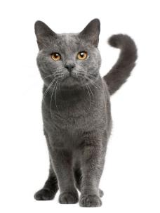 可爱的小猫摄影图片