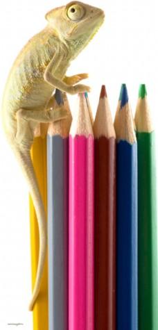 趴在铅笔上的蜥蜴图片