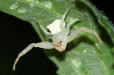 透明蜘蛛摄影图片