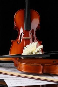 小提琴与鲜花图片
