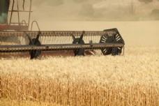 麦田收割机图片