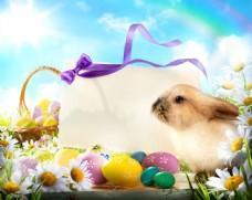 鲜花彩蛋与兔子贺卡图片