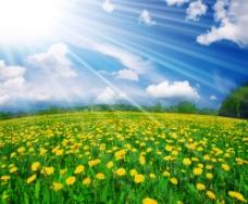 阳光下的小花花田图片