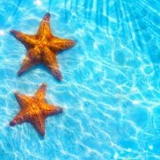 碧海与海星图片