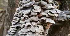 树干上的菌类