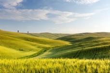 蓝天下的绿色麦田图片